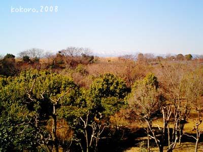 mori.2008-02-1.jpg